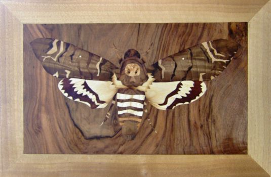 Death's-head Hawkmoth inlay by bengo-matus
