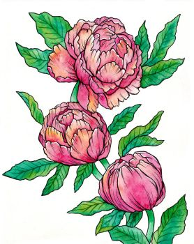 Blooming Stages - Peonies by Refielle