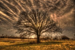 old dory lane by markroutt