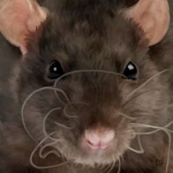 Morticia the Rat by RattyCorner
