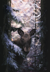 Moose by EarlyOctober