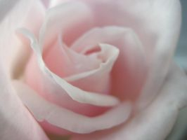 Pink Rose 2 by pomchillasitems