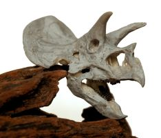 Triceratops LG1 by hannay1982