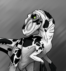 Raptor by Midnight-is-Life