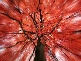 Red tree by Inilein