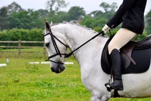 Dressage Stock 003 by HKW1994