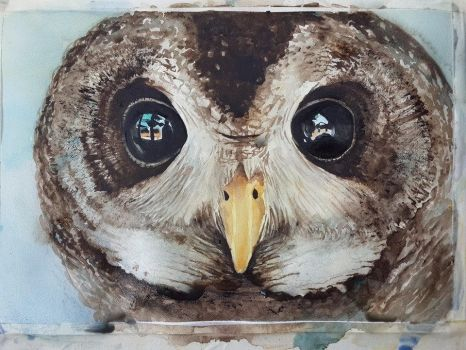 Wood Owl by 8025glome