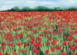 poppy field by classina