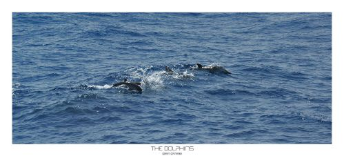 Gran Canaria - The Dolphins by skywalkerdesign