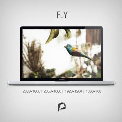 FLY by PietruH