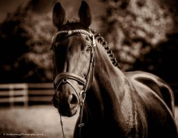Elite Foal Auction 2013 by AndersStangl