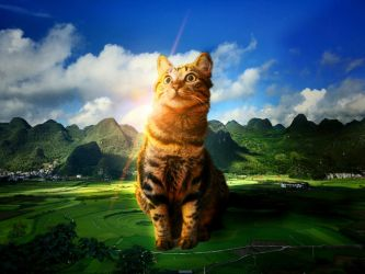 The majestic Cat by paraenesis