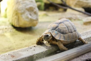 turtle by vailet92