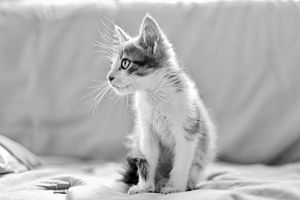 40_black and white by agu-incredible