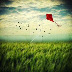 Lonely kite. by addy-ack