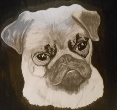 Pug by GregoryLynch