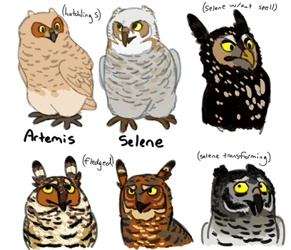Owlets by ImHereToDie