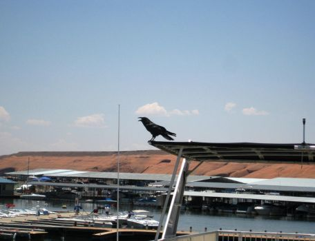Lake Powell 2008. Crow by VulpinePilot