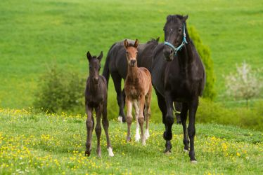 WB Foals and Angry Broodmare Stock by LuDa-Stock