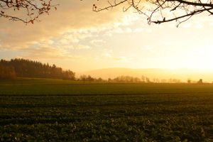 Field, Trees, Hills in Autumn Sundown by LoveForDetails