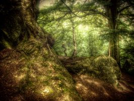 Forest trees STOCK by needanewname