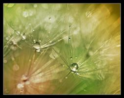 After rain by Alexandra35