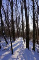 Ice Age Trail   by WisScout