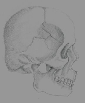 Skull Composition Practise by DisappearNote