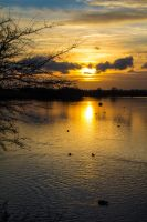 Fairlop Waters - 13. by LouHartphotography