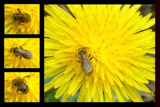 Busy Bee by taniabgd