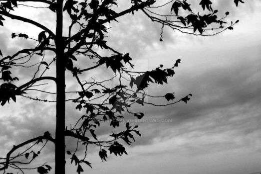 A Frightened Tree by MichaelArm