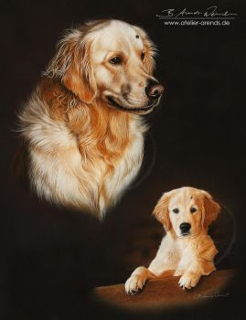 Golden Retriever Myka by AtelierArends