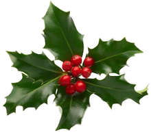 Xmas holly png 1 by iamszissz