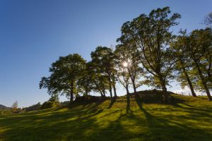 Grasmere trees by scotto
