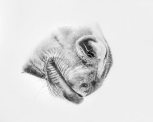 Graphite drawing by Lin-a-art