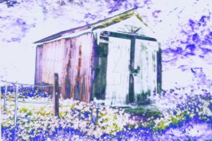Caswell_bay_shed by RichardjJones