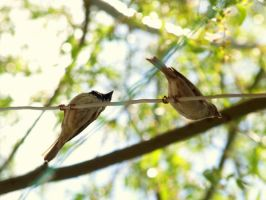 Sparrows on wire by erce