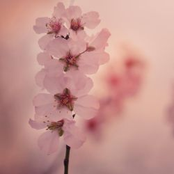 A Heartfull of Blooms by Mega-Shots