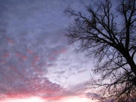 purple clouds around a tree by DisneyPrincessNeeNee