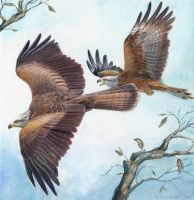 Red Black Kites by windfalcon