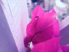 Pretty pink leaves~ by kath660