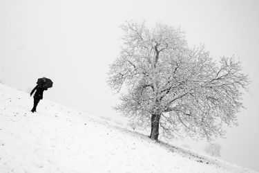Snow by jfphotography