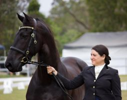 STOCK - Friesian Show 2012-10 by fillyrox