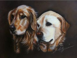 Golden Retriever and Labrador Drawing by lalabellexx