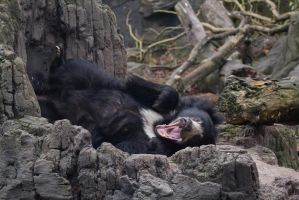 Sloth Bear 1 by CastleGraphics