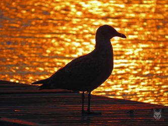 Gold And Ruby Seagull by wolfwings1