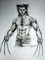 Wolverine by logan968