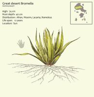 Great desert Bromelia by Hyrotrioskjan