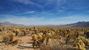 Joshua Tree - National Park by hquer
