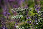 Multudes in July by organicvision
